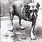 Alice In Chains - Alice In Chains album