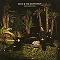 Echo & The Bunnymen - Evergreen album